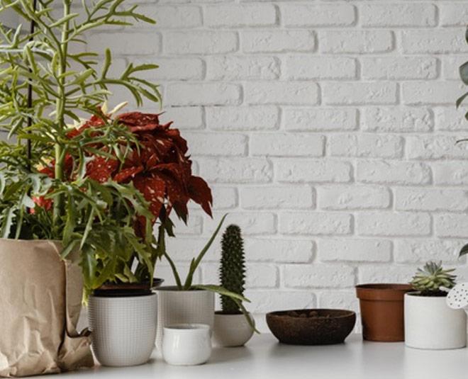 dehumidifyer plants for home main