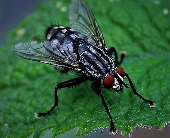 how to remove flies