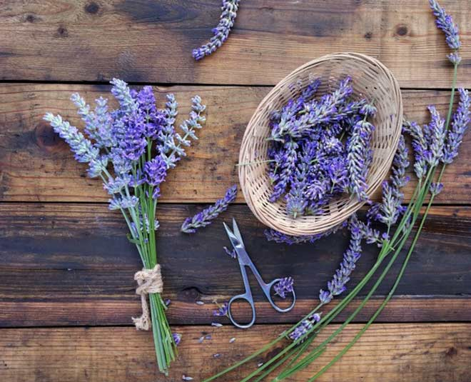 lavender flower uses know
