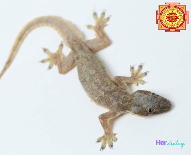 lizard at home vastu tips main