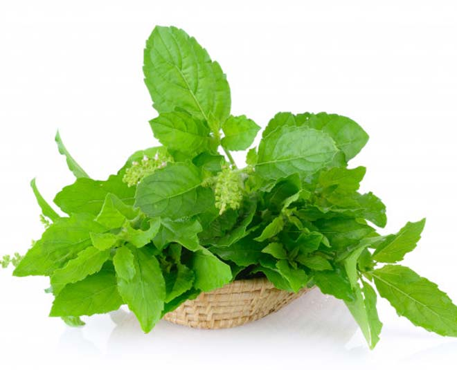 tulsi leaves benefits