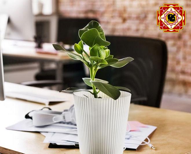 vastu plants for office m