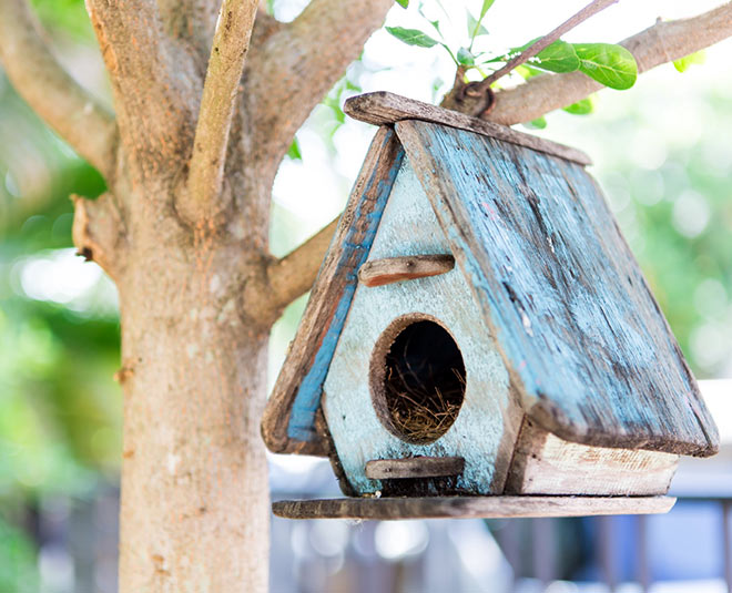 best shape bird houses