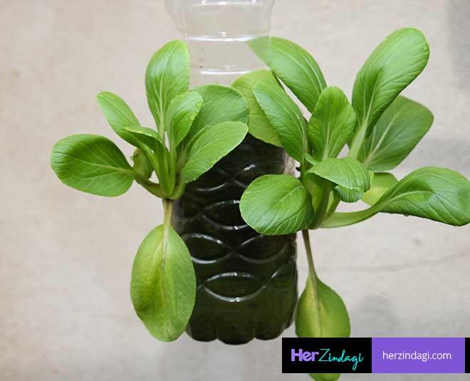 best ways to grow spinach in bottle