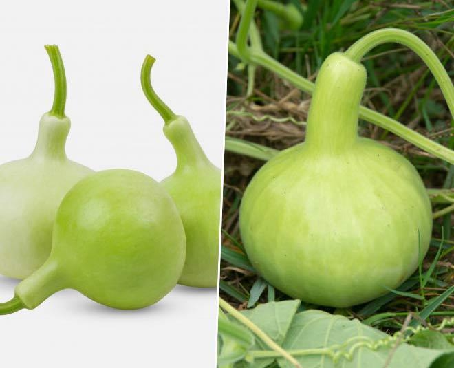 bottle gourd benefits