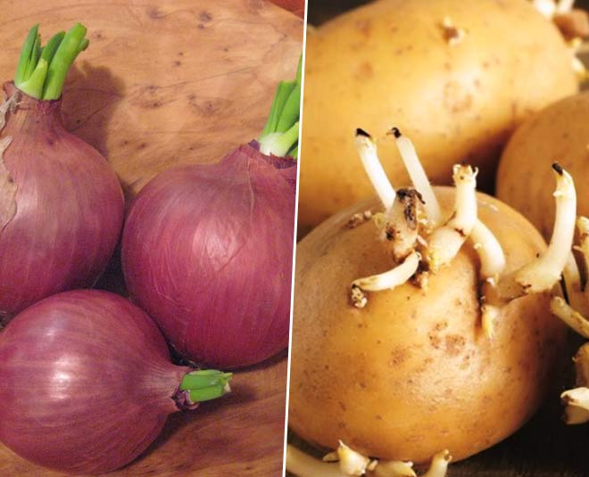 how to keep potatoes and onions from sprouting