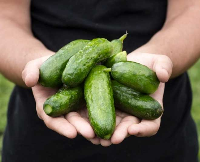 how  to  select  cucumbers