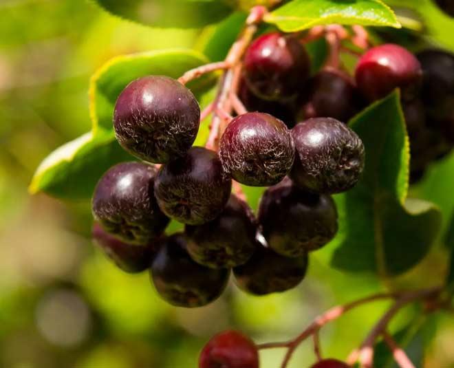 huckleberries m
