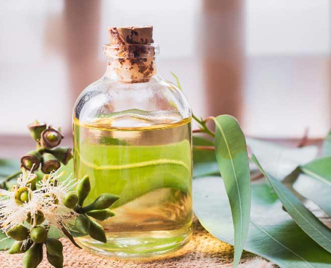 nilgiri oil benefits tips