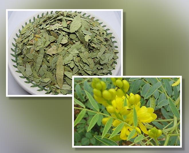 senna leaves benefits tips