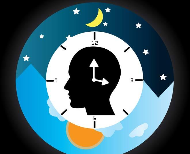 circadian rythms m