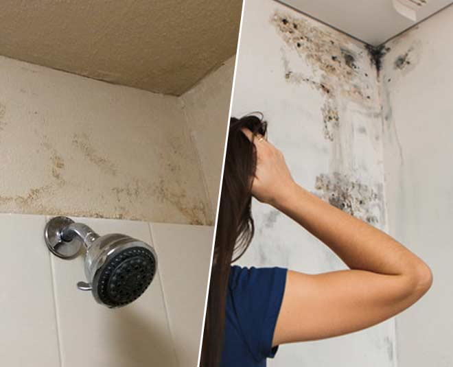clean mold from bathroom walls