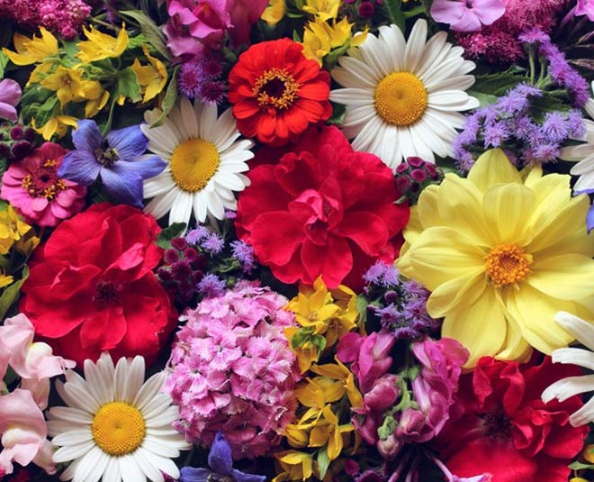 flowers for health main