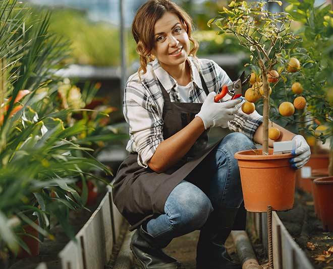 garden tips main