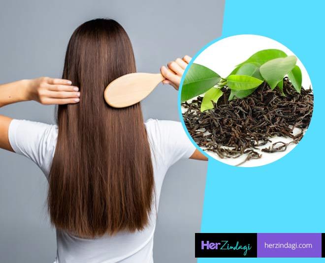 green tea for hair main