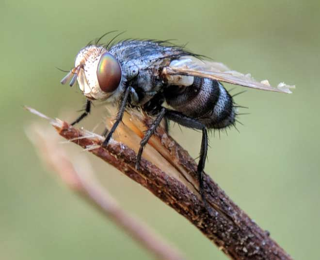 houseflies tips to get rid offmain