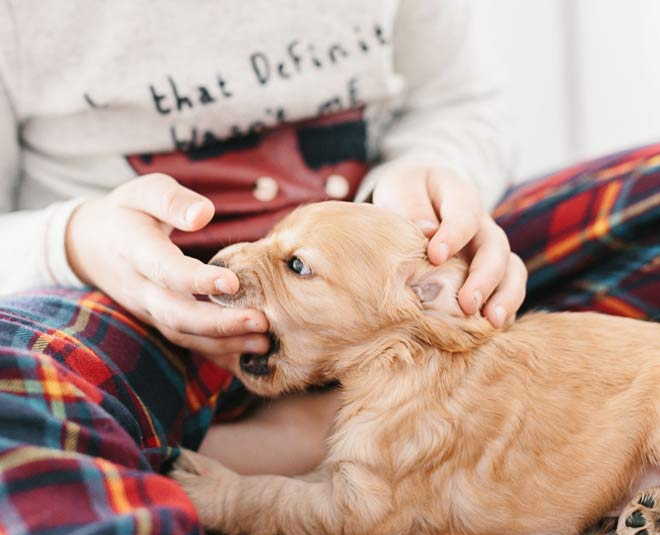 how to stop your puppy from biting tips