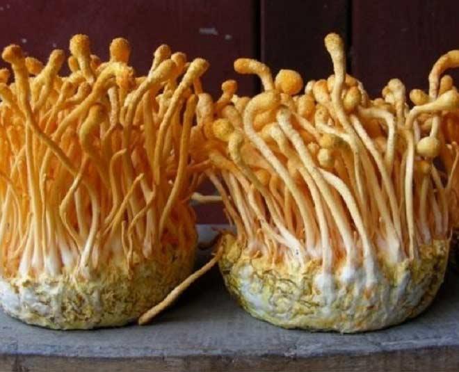 mushroom cut