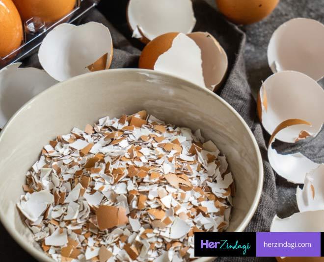 uses of eggshells main