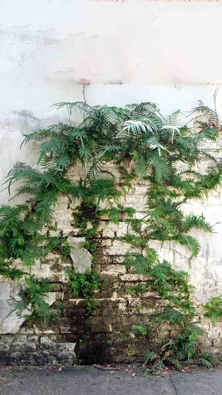 दीवारों पर उग गए हैं पौधे, ऐसे पाएं छुटकारा