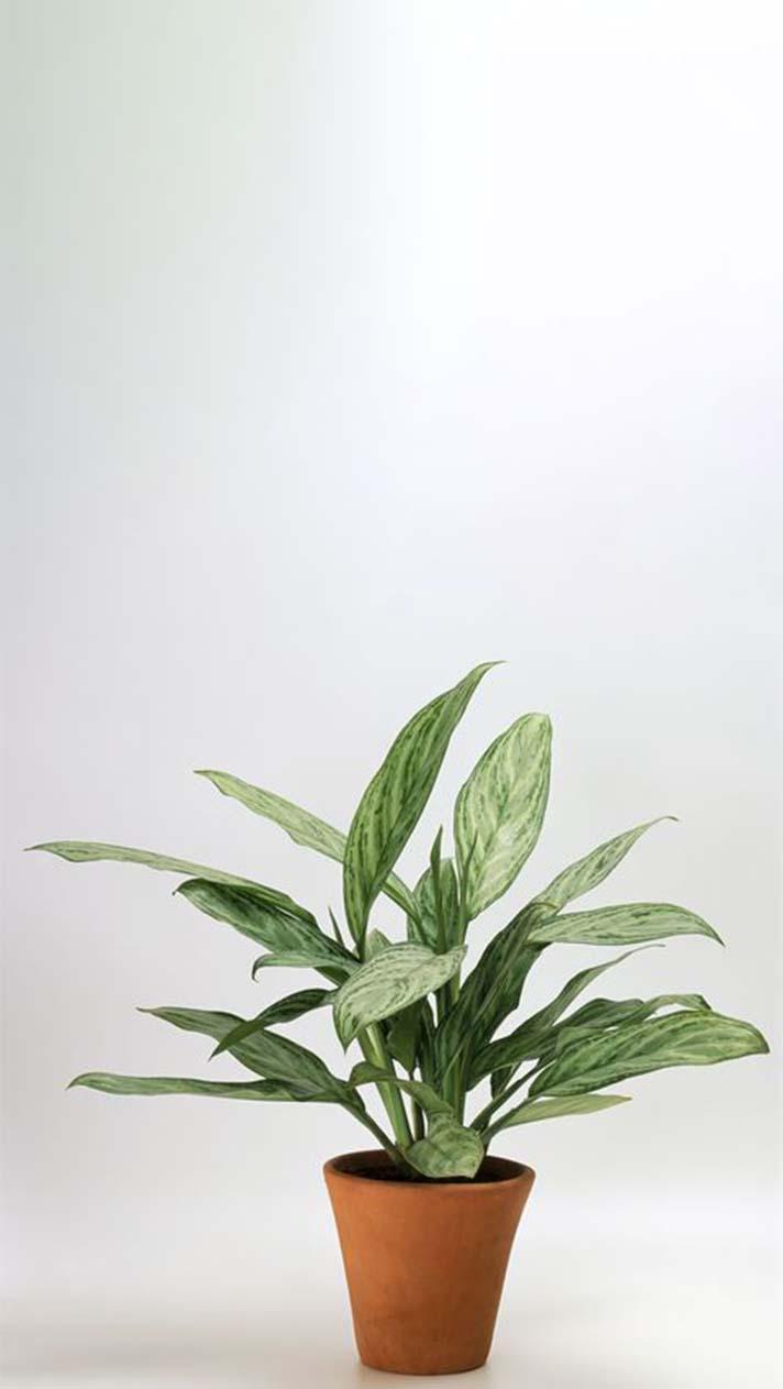 ये पौधे हवा को बनाएंगे शुद्ध